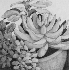 38succulents