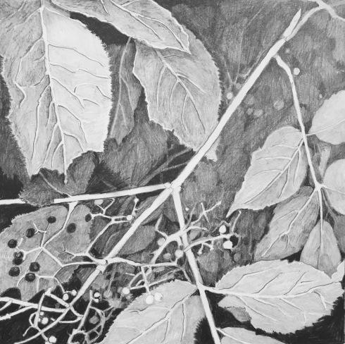 redelderberry